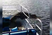 Thót tim khoảnh khắc cá sấu lao xuống thuyền du khách