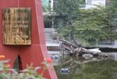 Hà Nội - Điện Biên Phủ trên không: Chiến thắng của bản lĩnh, trí tuệ