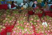 Nỗi niềm thanh long Bình Thuận