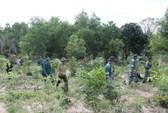 Nhiều sai phạm trong quản lý đất ở Phú Quốc