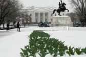Kẻ đột nhập Nhà Trắng
