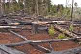 Mất hơn 5.100 ha rừng tự nhiên, một cán bộ lâm nghiệp bị bắt