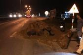 Bị CSGT dừng xe, đổ gỗ lậu xuống đường rồi bỏ chạy