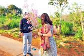 Phó Giám đốc Sở Tư pháp Bình Thuận tường trình về vụ bẻ hoa