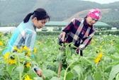 Kiến nghị thực hiện chính sách BHXH cho cán bộ hợp tác xã
