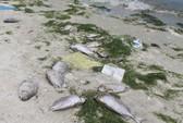 Tôm cá chết hàng loạt nghi do nước thải nhà máy đường