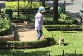 Lý giải chuyện cấm nuôi chó, mèo ở chung cư Sài Gòn