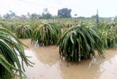 Mưa lũ gây ngập úng, sạt lở nặng ở Bình Thuận