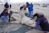 Kinh dị cá voi sát thủ