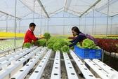 Vườn rau thủy canh thu trăm triệu mỗi tháng của thạc sĩ lịch sử