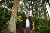 Có một rừng quế thiêng, thu hơn 500 tỉ mỗi năm