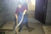 """""""Nữ hoàng rắn hổ mang"""" ở Trung Quốc"""