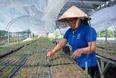Nông nghiệp cơ cấu lại thị trường, tránh phụ thuộc