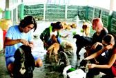 Giải cứu cún cưng