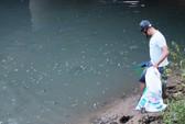 Khẩn cấp truy tìm thủ phạm vụ cá chết bất thường ở Quảng Ngãi