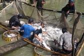 Trung Quốc là tâm điểm xuất khẩu của cá tra Việt Nam