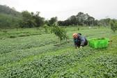 Nông nghiệp hữu cơ không chỉ có