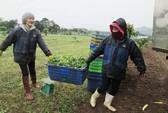 Công ty nông sản hữu cơ vốn 0 đồng kêu gọi thành công 10 tỉ đồng: