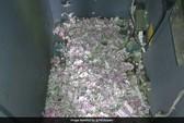 Chuột chui vào máy ATM, cắn nát cả đống tiền