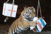 Soi kèo mới nhất trận bán kết Anh - Croatia