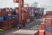 Nghi vấn hạt hạnh nhân Mỹ nhập khẩu vào Việt Nam tăng đột biến