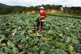 Nông sản xuất khẩu liên tục bị cảnh báo ở châu Âu