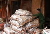 Mang đất Đà Lạt đến các tỉnh để trộn nông sản Trung Quốc