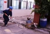 Bắt chó thả rông giữa trọng điểm Sài Gòn