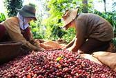 Chuỗi cà phê Việt trỗi dậy