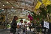 Hội chợ hoa Xuân Phú Mỹ Hưng 2019: Hội thi
