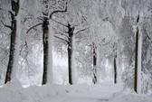 Những khung cảnh mùa đông tuyết phủ trắng xóa đẹp như cổ tích