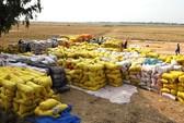 Giá lúa tăng, nông dân vẫn không vui