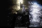 Úc: Lũ lớn, cá sấu và rắn bò lổm ngổm trên phố