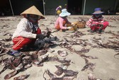 Giá lên, 1.000 tấn mực khô ở Quảng Nam thoát cảnh ứ đọng