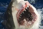 Nanh cá mập có sẵn kem đánh răng