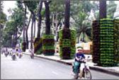 Lắp đặt 25 bó vỉa trang trí cây xanh