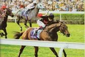 Một ngày trong thế giới đua ngựa