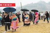 Cây ô trong đời sống của người Mông ở Lào Cai