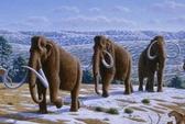 Nga, Hàn Quốc hợp tác nhân bản voi ma mút