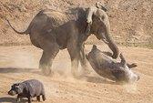 Hà mã đại chiến voi