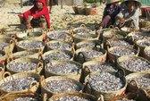 Ngư dân Tuy An trúng cá giò và cá nục