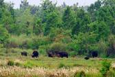 Vườn QG Cát Tiên sẽ tiếp nhận thêm 10 ngàn ha rừng tự nhiên