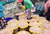 Ngư dân Phú Hài trúng mùa ruốc