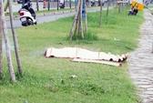 Hoảng sợ thấy xác phụ nữ nổi trên kênh Tàu Hủ
