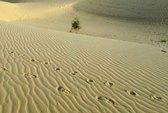 Phát hiện 87 thi thể chết khát trên Sahara
