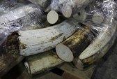 Tanzania: Bắt 3 người Trung Quốc, thu giữ 797 ngà voi