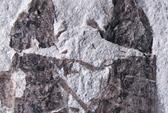 """Cặp côn trùng """"yêu nhau"""" suốt 165 triệu năm"""