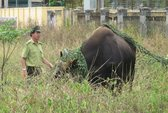 Cứu hộ động vật hoang dã: Thiếu và yếu!