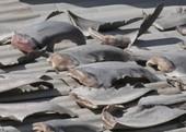 Đại sứ quán trả lời về vụ phơi vây cá mập trên mái nhà ở Chile