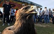 """70 đầu chim độc đáo tham gia cuộc thi """"Chim săn mồi"""""""